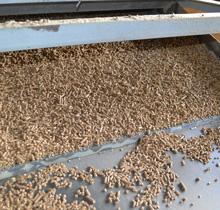 готовая гранула на выходе из линии грануляции
